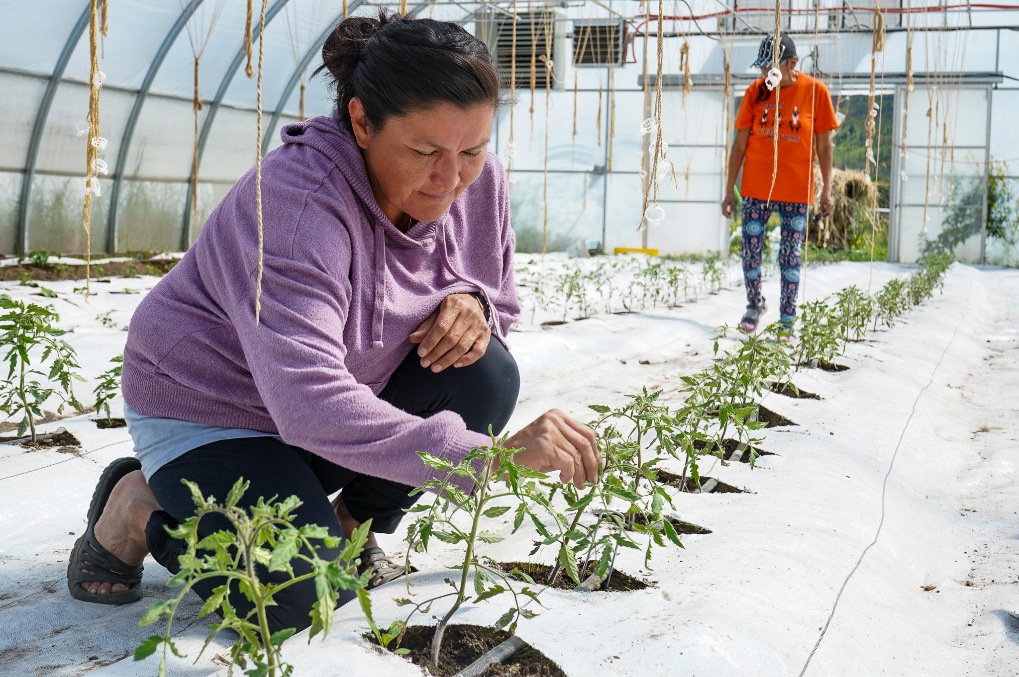 Yuneŝit'in Greenhouses.EcotrustCanada.2021